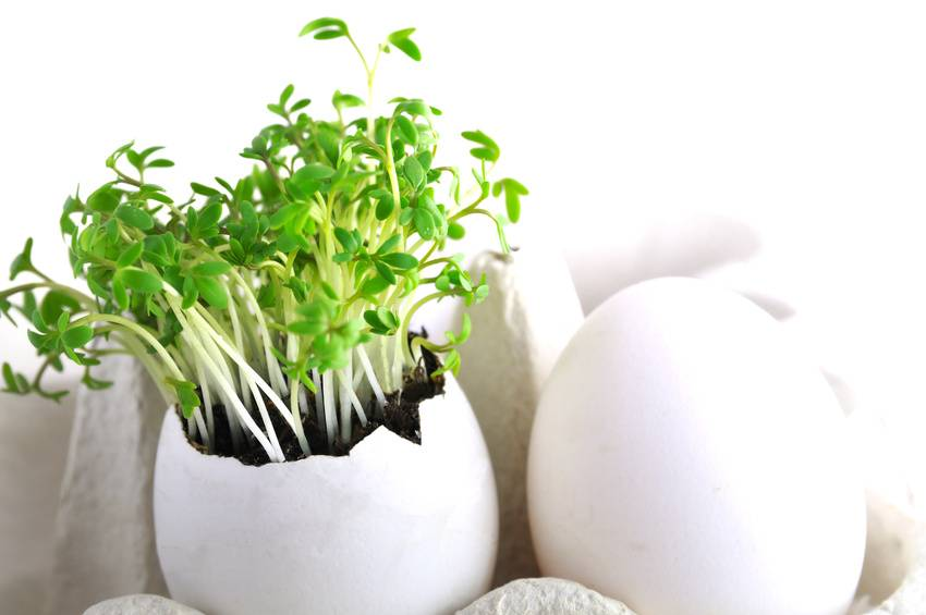gew rzpflanzen von der ernte bis zur lagerung besserhaushalten. Black Bedroom Furniture Sets. Home Design Ideas