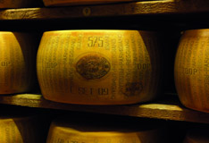 Parmigiano Reggiano meets Sommeliers Teil 1