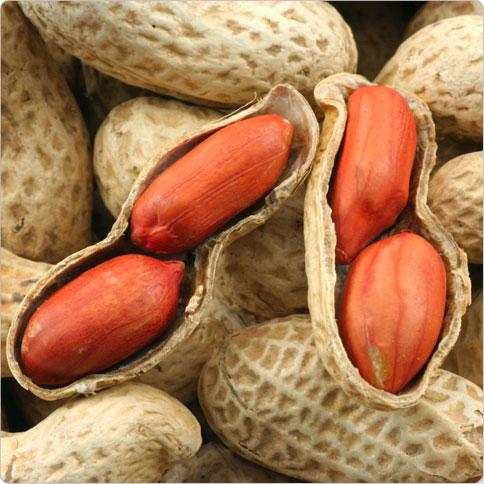 Bildergebnis für Erdnuss